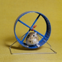 gerbil_in_a_gerbil_wheel~AP-1LOZHZ-TH